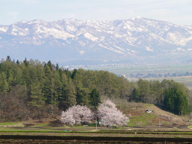 桜の花が咲く季節、残雪の山並みの北信州の風景
