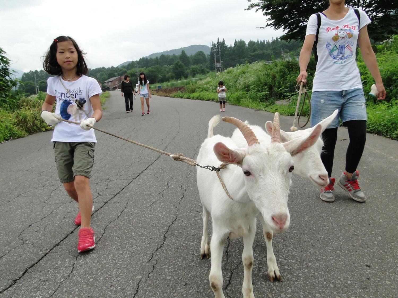 ペンションアウラの山羊とお散歩企画
