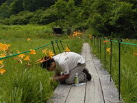 湿原の観察