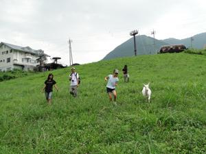 広い草原をヤギと散歩