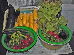 野菜も手作り・無農薬